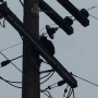 Cat rescued from top of electric pole in Tarpey