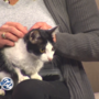 Pet of the Week: Gelato is a curious kitty who needs a loving home