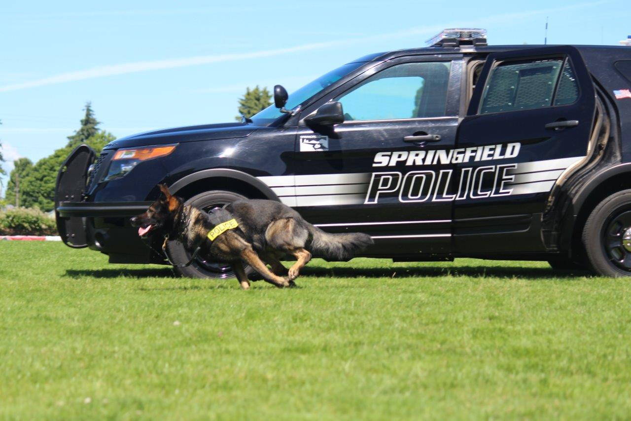 &quot;Officers on scene speculate the outcome may have been deadly had K-9 Falco not intervened at the moment he did,&quot; Springfield Police said in a report. (Courtesy Springfield Police)<p></p>