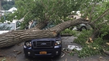 Mammoth tree branch falls onto cars at Webster hotspot