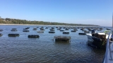Oyster farm making a splash in Pensacola