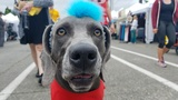 Photos: Pooches parade through Fremont