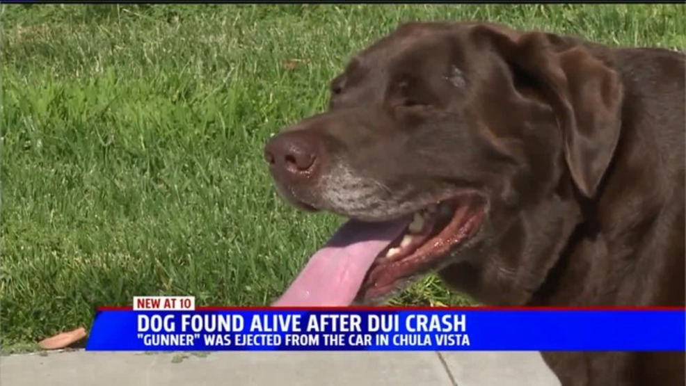 Dog survives being thrown from truck in DUI crash | WKRC