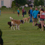Dog park opens in Bellevue