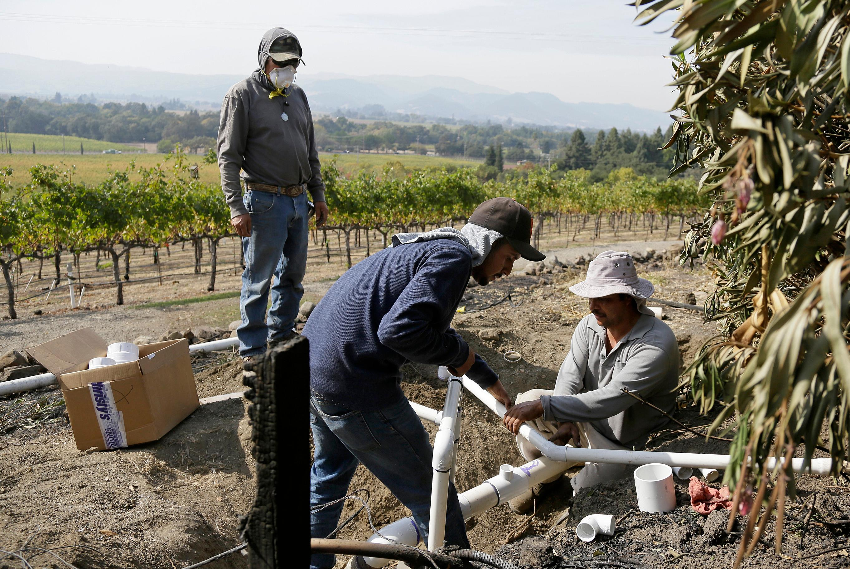 Workers at the Signorello Estate winery install new irrigation pipes to replace ones burned by wildfire Monday, Oct. 16, 2017, in Napa, Calif. State and local officials say they are trying to get people back into their homes, but they cautioned that it could take days and even weeks for neighborhoods hard hit by Northern California wildfires. (AP Photo/Eric Risberg)