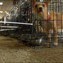 Mojave Animal Shelter to close under budget proposal