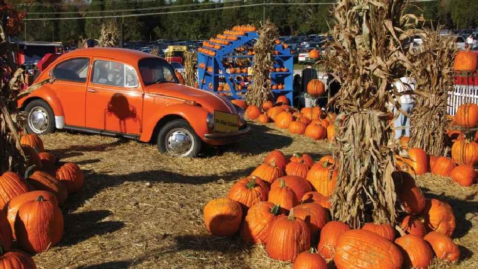 The 7 Best Pumpkin Patches Within An Hour S Drive Of D C Dc Refined