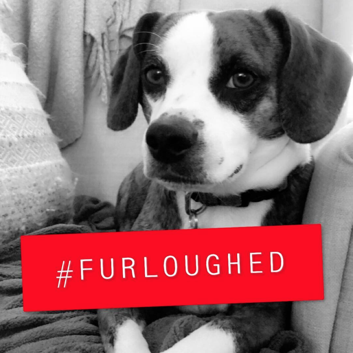 D.C. has slowed to a snail's pace as the government shut down trudges on, but the pets of furloughed employees have been getting lots of extra cuddles and walks. Here are some of the cutest pets from #FURlough on Instagram. (Image via @wethepeopledc)
