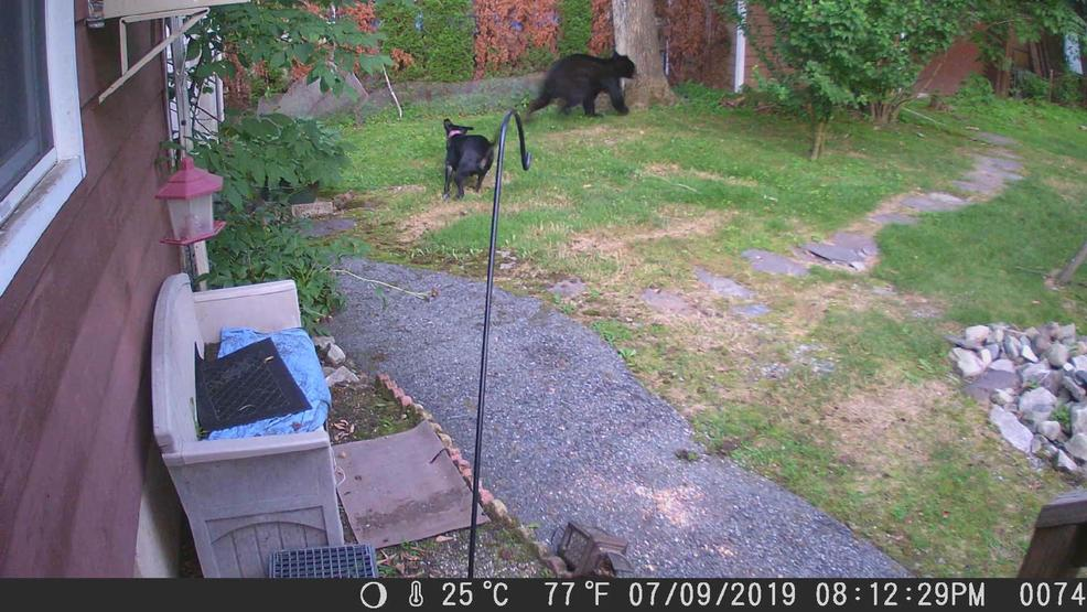Storyful-222915-Fearless_Pup_Launches_Itself_at_Black_Bear_in_New_Jersey_Backyard.jpg