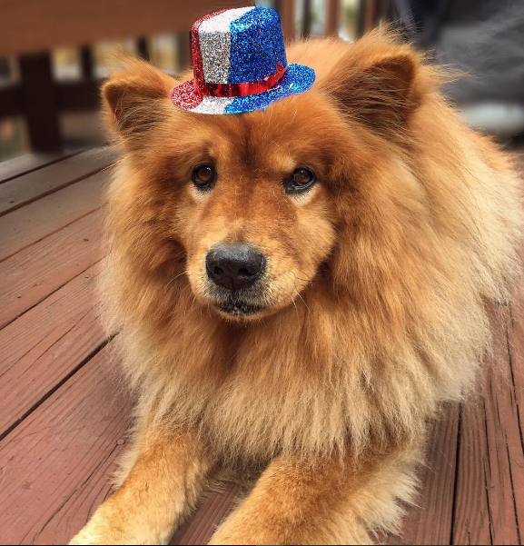 IMAGE: IG user @izzy_the_chow / POST: Hats off to those who serve our country... Happy Memorial Day!