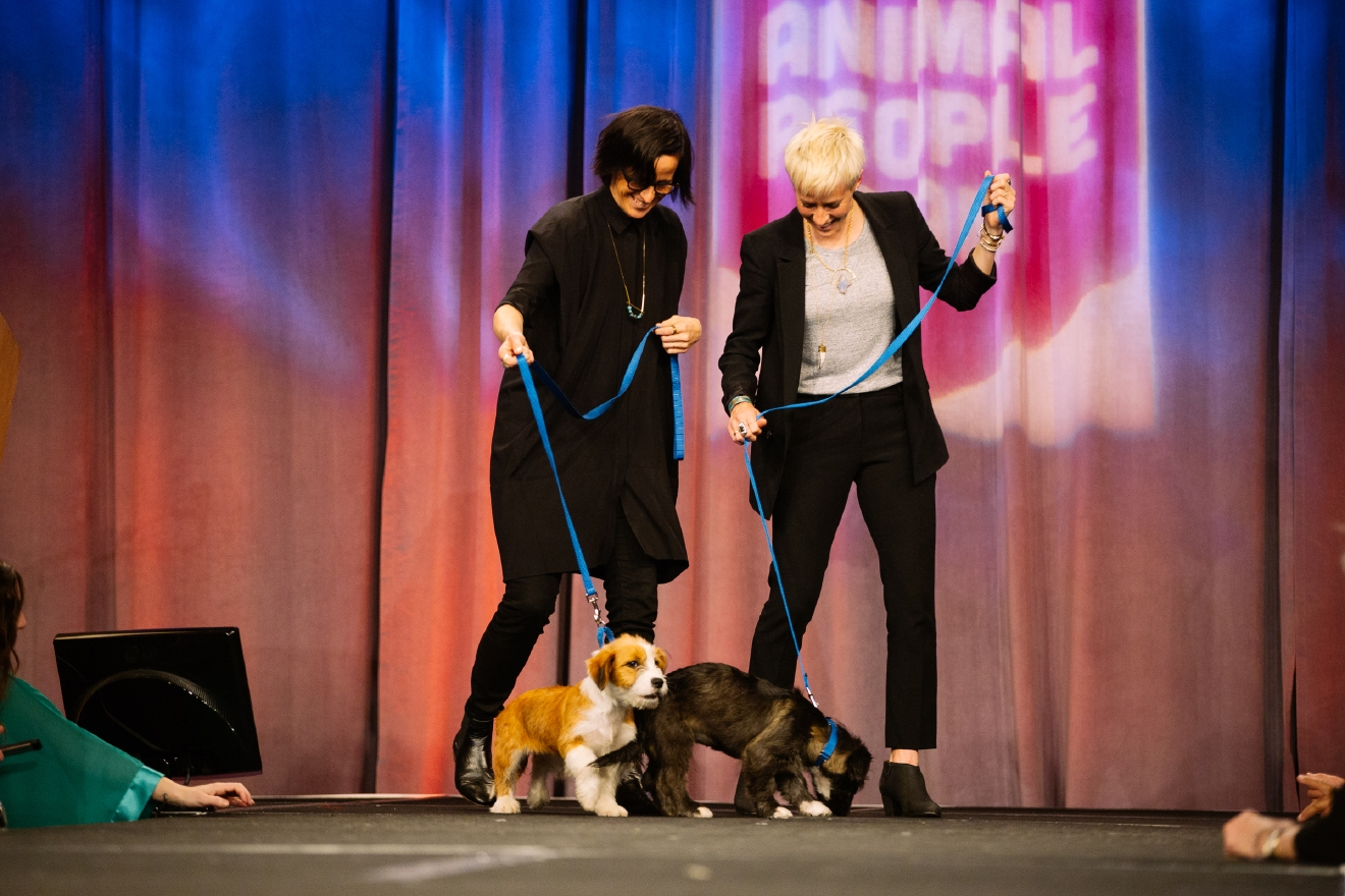The 2016 Annual Tuxes and Tails event raised $4,261,000 through donations, auctions, raffles and more lat night. The money raised is going to fill the new Seattle Humane facility and shelter with everything needed including medical equipment and more. The money raised last night brings Seattle Humane to over 90% of their fundraising goal for the new facility. Local celebs walked adoptable cats and dogs down the runway at the Bellevue Hyatt Regency on Saturday night to a ballroom filled with animal people. May 7th 2016. (Image: Joshua Lewis / Seattle Refined)