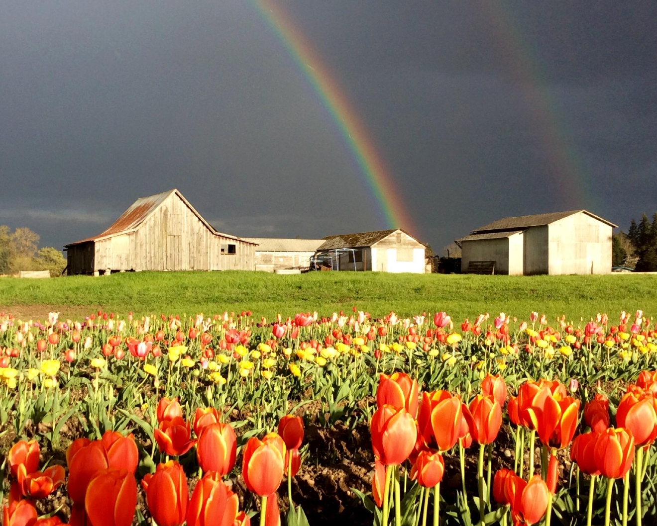 Rainbow over flower farm near Corvallis (Valerie Grig Devis/CC by 2.0)