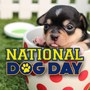 National Dog Day: America's top canine names