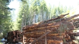Sheriff's office investigates fatal logging accident near Lyons