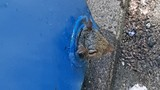 Rescue crew saves squirrel trapped in dumpster