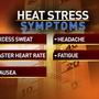 Triple digit temperatures are expected rest of the week, how to avoid heat stress