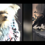 VIDEO: 'Get off my dog' owner yells as Yorkie puppy is nearly swept away by large bird