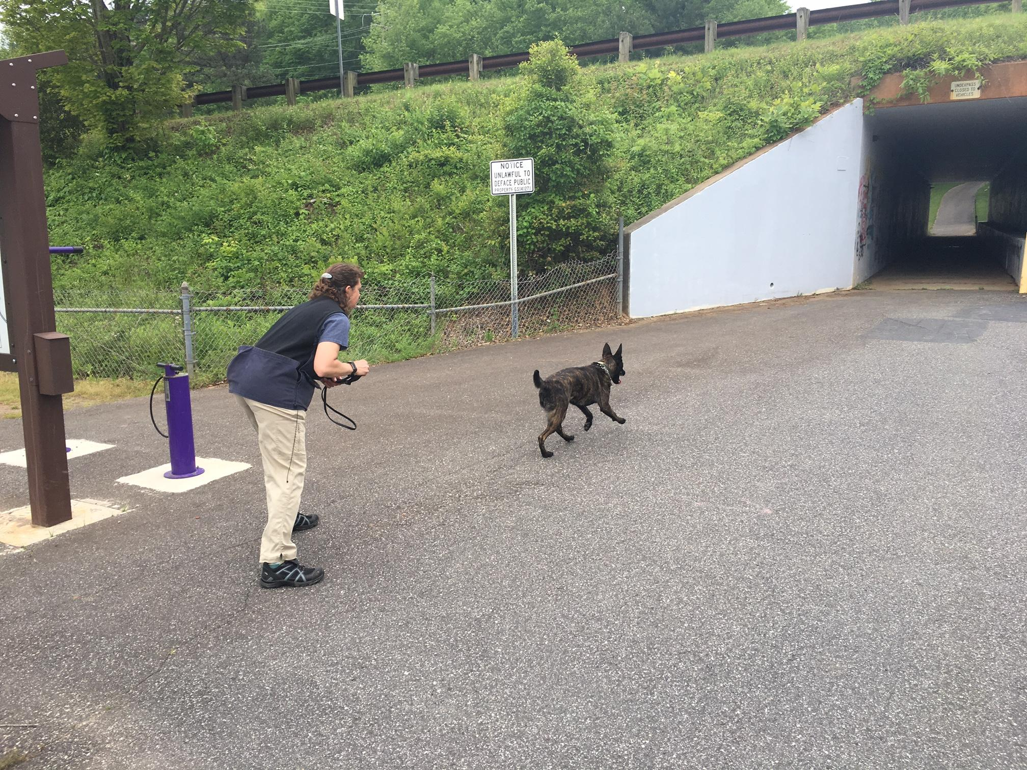 Western Carolina University is out for the summer, and dogs are roaming around campus. Cadaver dogs and their handlers from across the country are attending a training program. (Photo credit: WLOS staff)