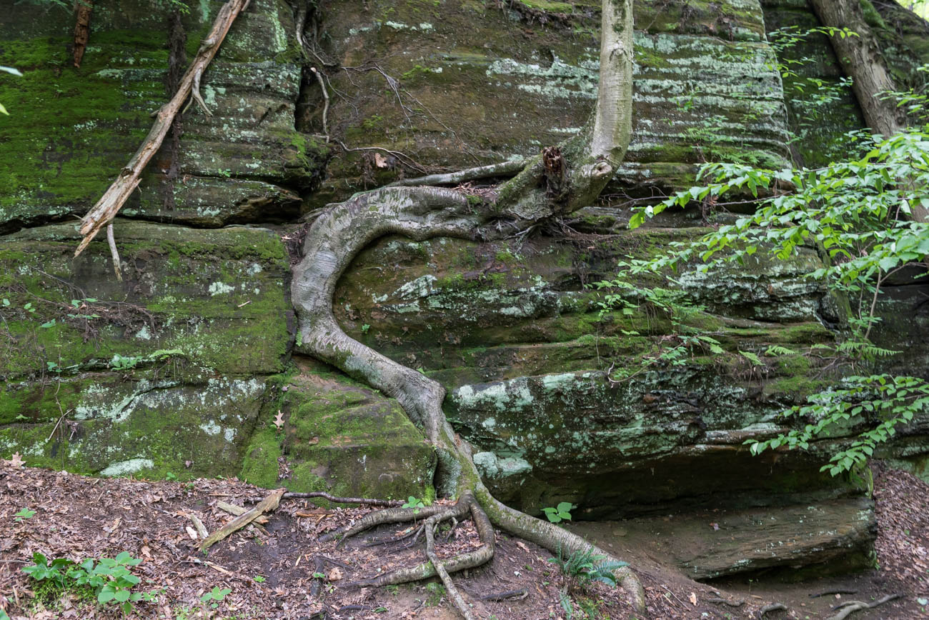 Blackhand Gorge State Nature Preserve is a 956-acre preserve located along the the Licking River in Licking County, OH. It features a 4-mile long sandstone formation that once featured a black hand petroglyph until it was destroyed in 1828 when canal builders destroyed the cliff face using dynamite. In addition to cliffs and walking paths, it has the only bike trail in Ohio's state nature preserve system, which stretches for four miles. The preserve is dog-friendly so long as they stay on the paved paths throughout the area. Blackhand Gorge is 155 miles northeast of Cincinnati. ADDRESS: 2200 Gratiot Rd SE, Newark, OH 43056 / Image: Mike Menke // Published: 6.22.18