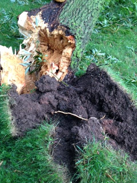 Aug. 14: Tree trunk snaps at Voyager Park in De Pere. (Submitted by Eliza)