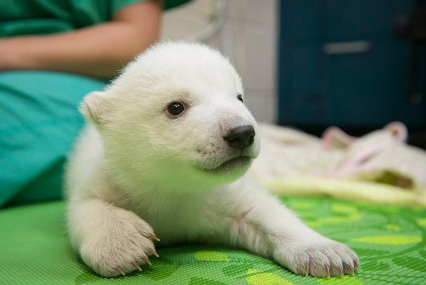Columbus Zoo Names Polar Bear Cub Katv