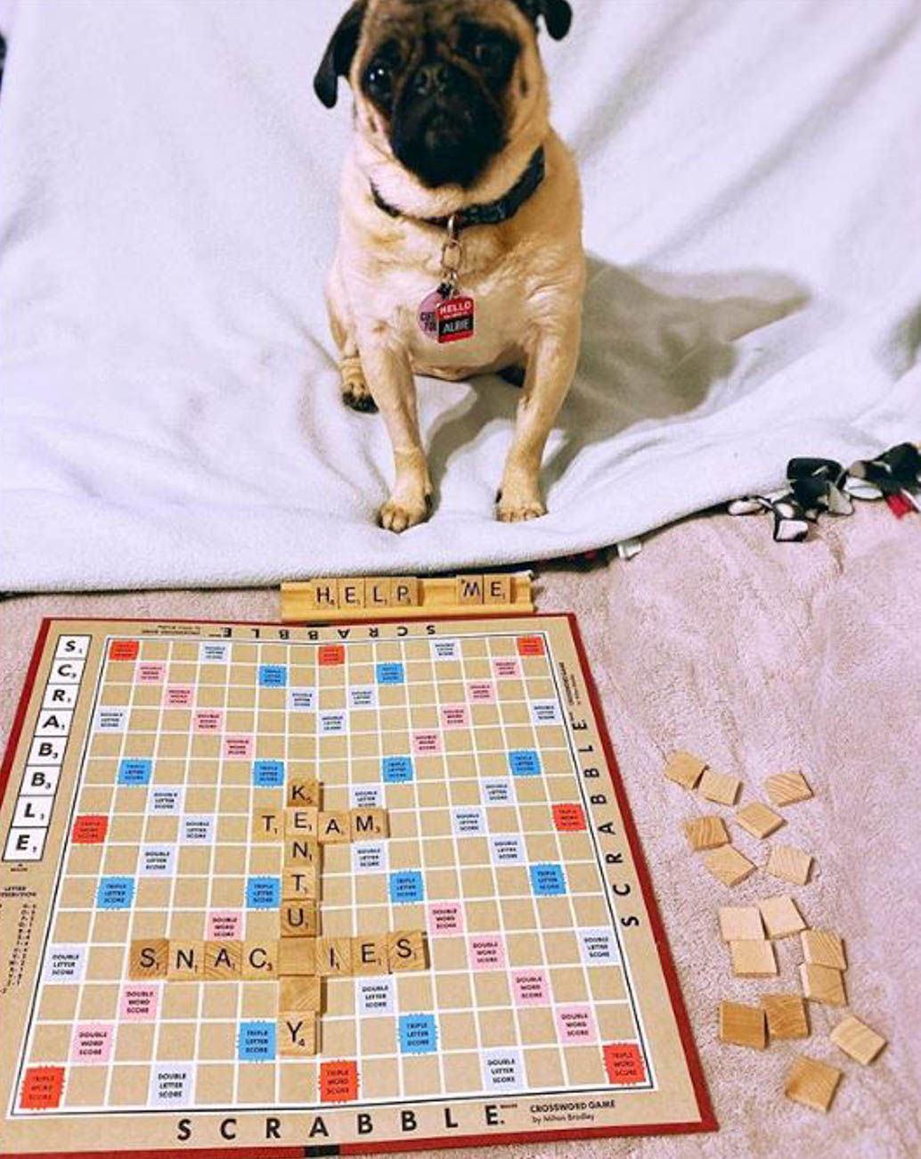 Getting their Scrabble on / Image courtesy of Instagram user @albie_thepug // Published: 4.1.20