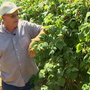 Whatcom County raspberry growers worry about future after spike in imported berries
