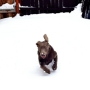 Gallery: Pups and other pets play in the snow!