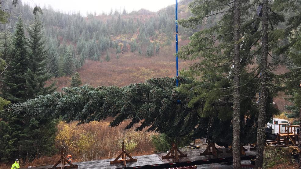Resultado de imagen para U.S. Capitol Christmas Tree begins cross-country journey this Friday with tour of Oregon