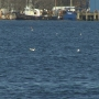 U.S. Coast Guard looking to solve oil spill mystery in New Bedford