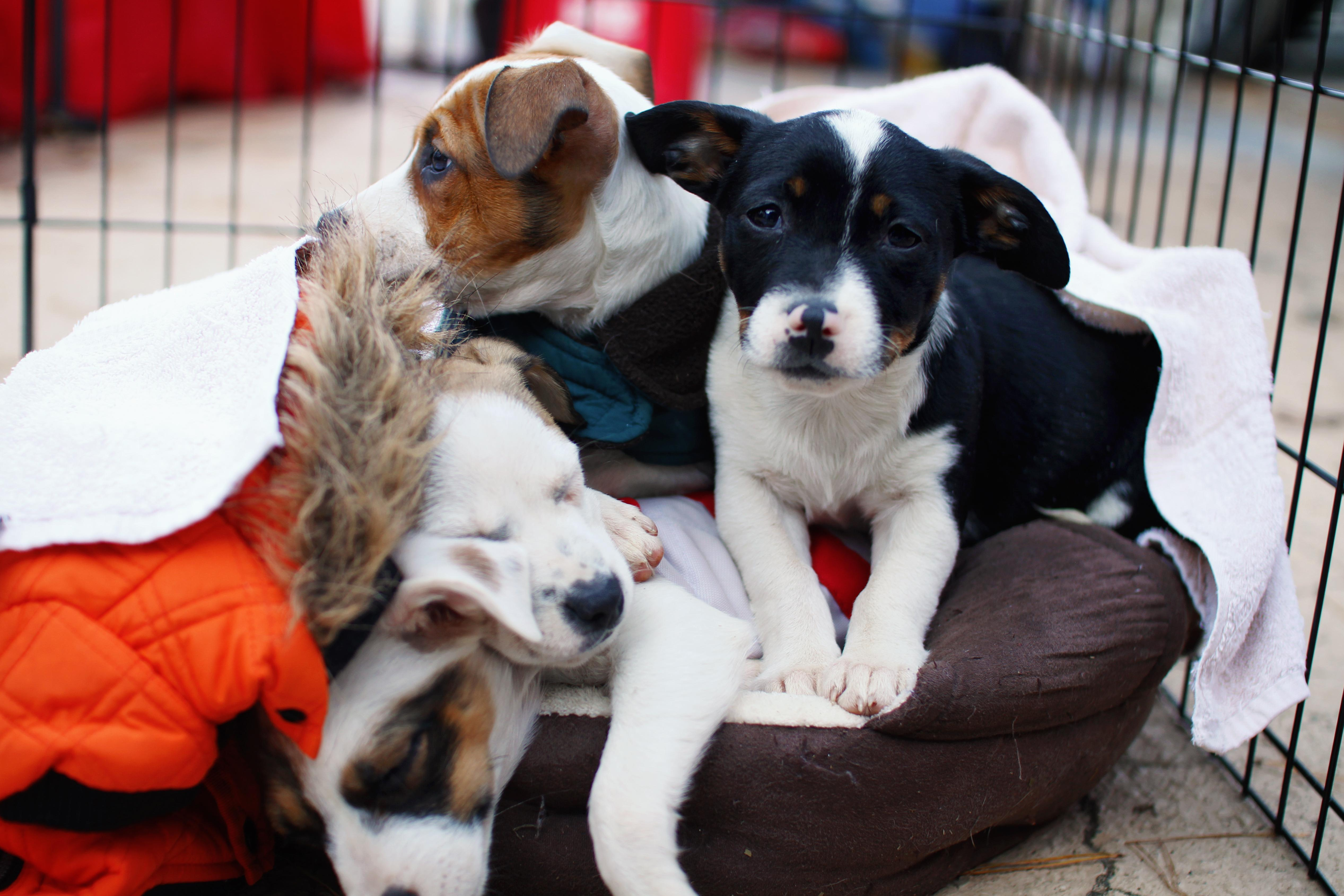 The scene at News 13's Pet Project event on Nov. 10, 2017, held at Camp Bow Wow in Arden. Forty-one dogs were adopted at the event and almost $400 was raised to benefit homeless animals at area shelters. (Photo credit: WLOS Staff)