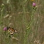 Columbia creates sanctuary for migratory monarch butterflies