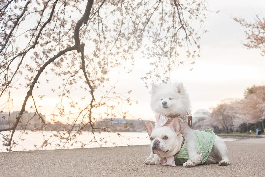 This year, Sebastian and Luna wore outfits specifically designed for the shoot made by Emily, to celebrate the launch of their dog clothing line that will be out later this year.(Image: Emily Abril)