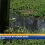 Residents fed up with sewage in Pine Grove yards
