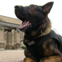 """We love furry heroes"": Elementary students buy Springfield Twp. K9 protective vest"