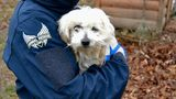 13 dogs rescued from middle Tennessee puppy mill