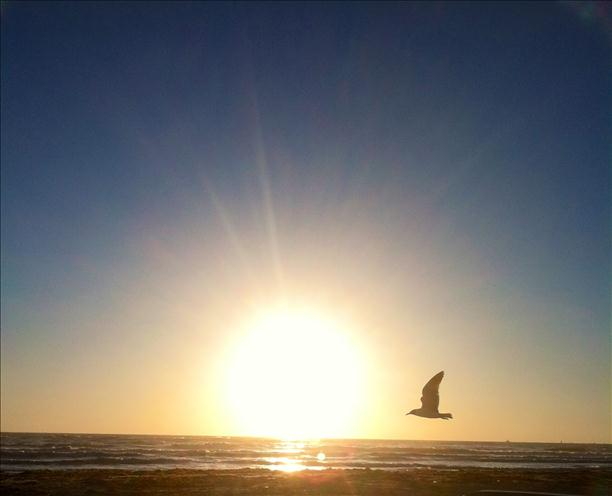 Sea Gull Sunrise