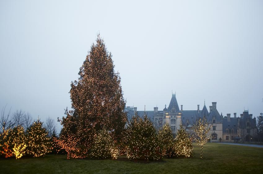 55-foot Norway spruce tree, lit by 55,000 tiny bright lights, on the Frown Lawn. (Photo Credit: The Biltmore Company)