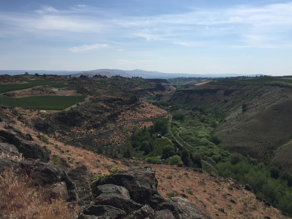 The view of Cowiche Canyon from Wilridge vineyard. The trail was was once a rail line, now a hiking trail. (Image: Frank Guanco)