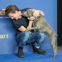 Gallery: Tom Holland's dog steals the show at 'Spider-Man: Homecoming' launch