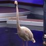 Wild Wednesday: Tango and Hula from the Cincinnati Zoo visit GMC