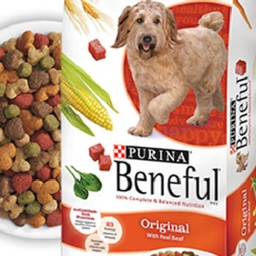 Is Purina Beneful Harmful To Your Dog S Health Local Vets Weigh