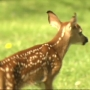 Battle Creek family takes in a baby deer