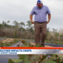 Crops affected by Northwest Florida hard freeze