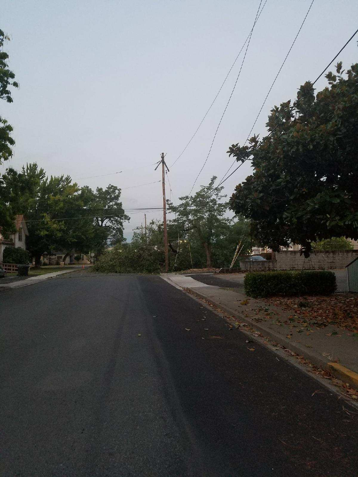 Pacific Power says, 9 power poles in total were brought down by the oak tree. (Pacific Power)