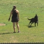 Lynchburg large-area dog park closed for maintenance