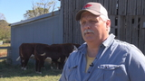 Oldest cattle exhibitor at AR state fair calls it quits after truck stolen