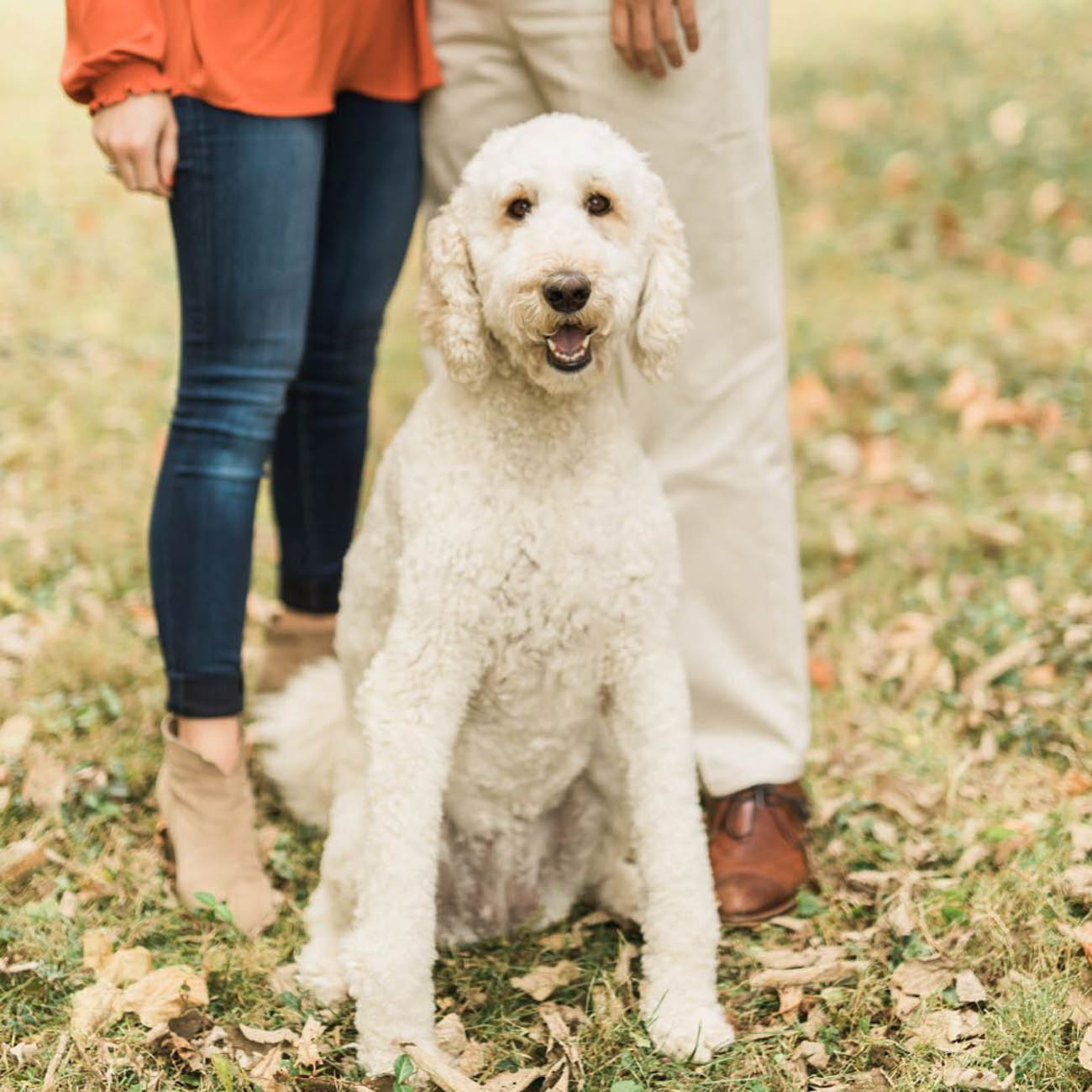 Emmy Lou is not just a local Goldendoodle, but a local hero, too. This sweet pup is a therapy dog at Cincinnati Children's Hospital where she brings joy to people who need it most. / Image courtesy of Instagram user @emmylou.thedoodle // Published: 11.28.18