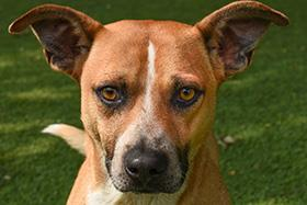 Magneto may have the tough-guy name and profile, but he's a sweetie. He's a 3-year-old American Blue Heeler mix and he's ready to settle into a new home with his forever family. Find out how to adopt him at SAHumane.org. (Photo: San Antonio Humane Society)