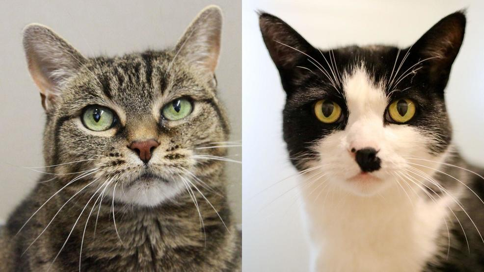 STAR 101.5 Pet(s) of the Week: Bonded pair of 8-year-old cats, Paola and Winston